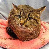 Adopt A Pet :: Mum - Greenville, IL