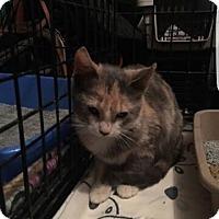 Adopt A Pet :: CONSTANCE - Bloomingburg, NY