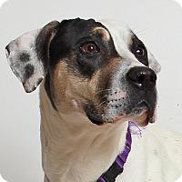 Adopt A Pet :: Molly - Walnut Creek, CA