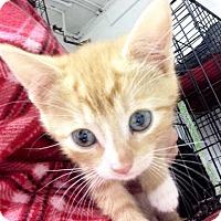 Adopt A Pet :: Topaz - River Edge, NJ