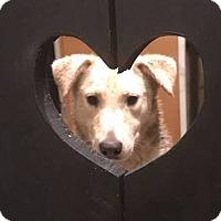 Adopt A Pet :: Beauty - Lima, PA