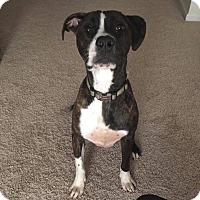 Adopt A Pet :: Alfred (Gotham Litter) - Charlotte, NC