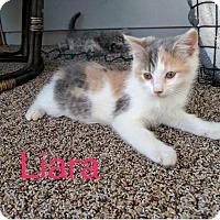 Adopt A Pet :: Liara - Painted Post, NY