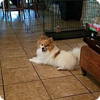 Adopt A Pet :: Gizzy - conroe, TX