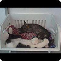 Adopt A Pet :: Hemmingway & Camila - Winter Haven, FL
