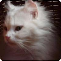 Adopt A Pet :: Angel - Morris, PA