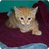 Adopt A Pet :: Danny - Secaucus, NJ