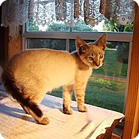 Adopt A Pet :: Dove - Kalamazoo, MI