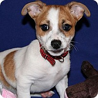 Adopt A Pet :: Ripper - Scottsdale, AZ