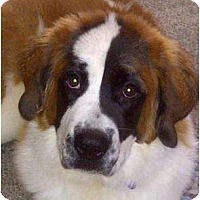 Adopt A Pet :: Taffy--adopted!! - New Richmond, OH