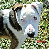 Adopt A Pet :: Wallace - Vancleave, MS