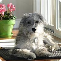 Adopt A Pet :: Maggy - Beachwood, OH