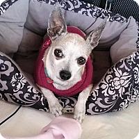 Adopt A Pet :: Mitzi - Ft. Collins, CO