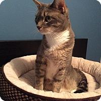 Adopt A Pet :: Margo - Colmar, PA