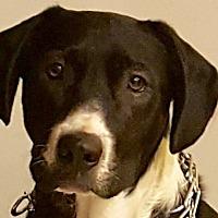 Adopt A Pet :: Jackson - Toms River, NJ