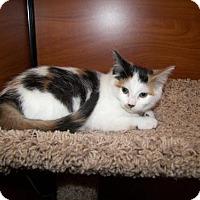 Adopt A Pet :: Hannah - Hamilton, ON