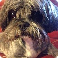 Adopt A Pet :: Marley - Goldens Bridge, NY