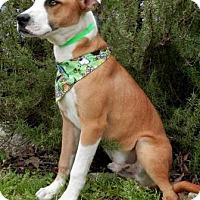 Adopt A Pet :: Charlie Brown - Tyler, TX