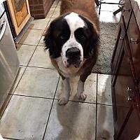 Adopt A Pet :: Dalton - McKinney, TX