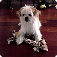 Adopt A Pet :: Divo n/k/a Ernie - Ridgefield, CT