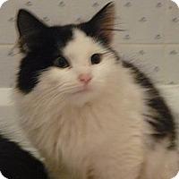 Adopt A Pet :: Lena - Island Park, NY