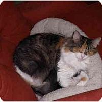 Adopt A Pet :: Tequila Rose - Warren, MI