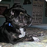 Adopt A Pet :: Cleo - Norwalk, CA