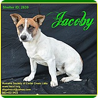 Adopt A Pet :: Jacoby - Plano, TX