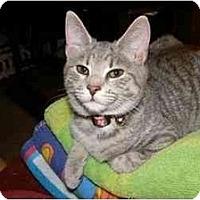 Adopt A Pet :: Rose - Catasauqua, PA