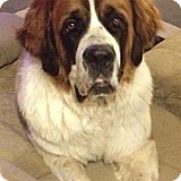 Adopt A Pet :: Bella--courtesy post - Valley Springs, CA