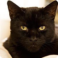 Adopt A Pet :: Steve - Murrieta, CA