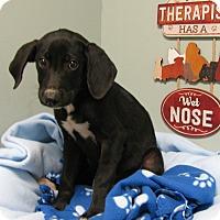 Adopt A Pet :: Manhattan - Groton, MA
