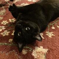 Adopt A Pet :: Melody - Greer, SC