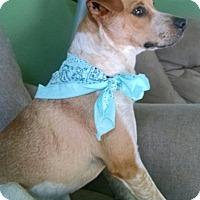 Adopt A Pet :: SPENCER - PARSIPPANY, NJ