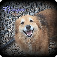 Adopt A Pet :: Ginger - Denver, NC