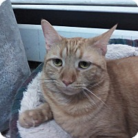 Adopt A Pet :: Olivia - wyoming valley, PA