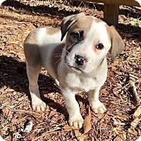 Adopt A Pet :: Angel - Thompson, PA