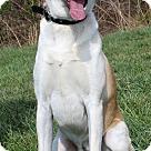 Adopt A Pet :: Kona