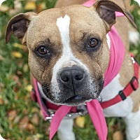 Adopt A Pet :: Rue - St Helena, CA