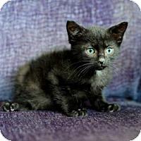Adopt A Pet :: Pearl - Ft. Lauderdale, FL
