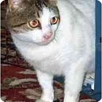 Adopt A Pet :: Magnolia - Summerville, SC
