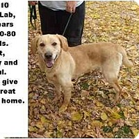 Adopt A Pet :: # 569-10 - ADOPTED! - Zanesville, OH