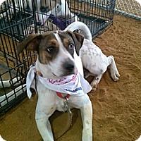 Adopt A Pet :: Valentino - Miami, FL