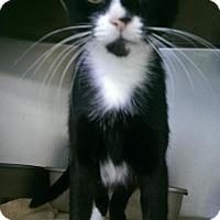 Adopt A Pet :: Jessie J - Richboro, PA