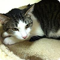 Adopt A Pet :: Makita - Milwaukee, WI