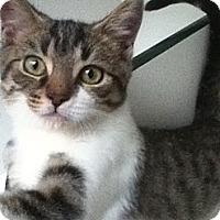 Adopt A Pet :: Miko - Hamilton, ON