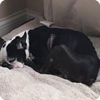 Adopt A Pet :: Thor - Jackson, TN