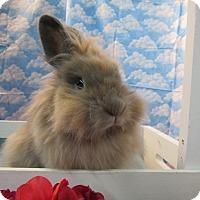 Adopt A Pet :: Tali - Newport, DE