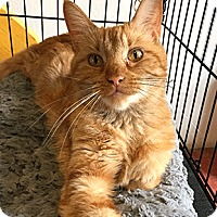 Adopt A Pet :: Rosanna - Oakland, CA