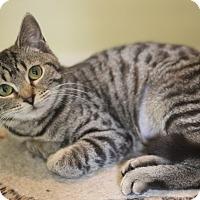 Adopt A Pet :: Sylvua - Dalton, GA